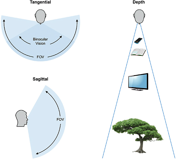 Figure 1. Spatial awareness depends on two critical elements of the visual system: visual field and depth perception.